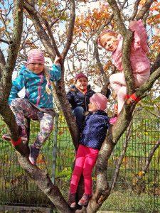 Kinder auf Baum
