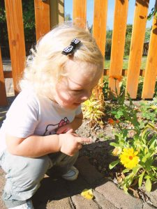Ringelblume entdecken